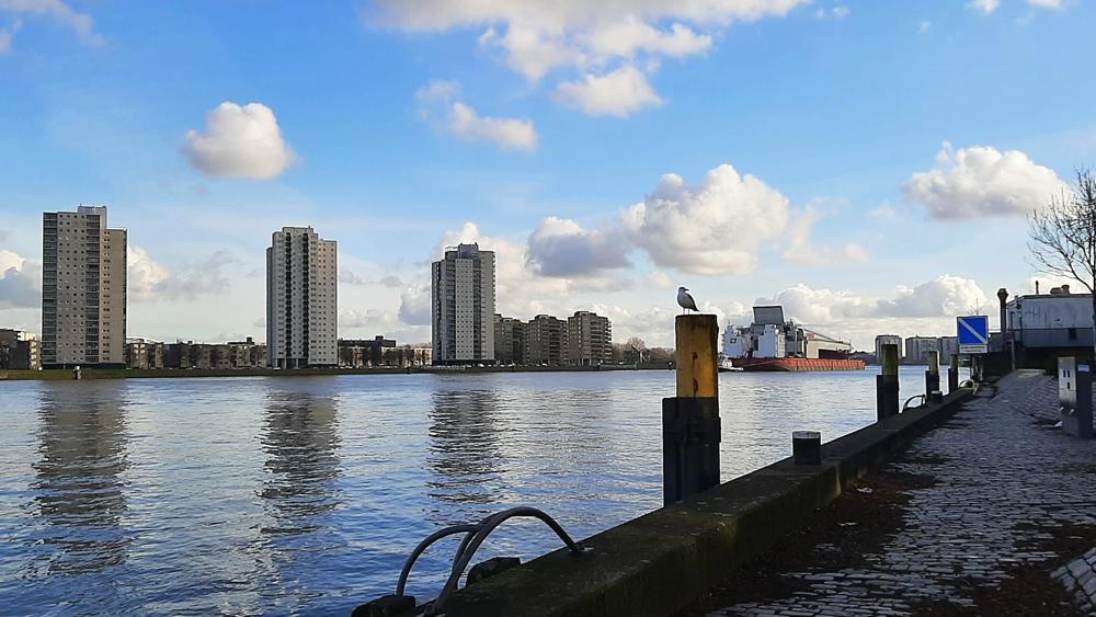 Jaap Mol, Rotterdam.jpg